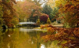 Photo courtesy of Bartlett Arboretum and Jay Mills-Smith